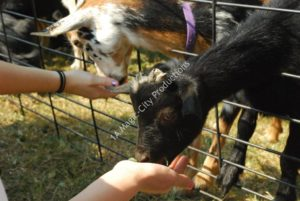 Ponies & Petting Zoo Miami FL 7